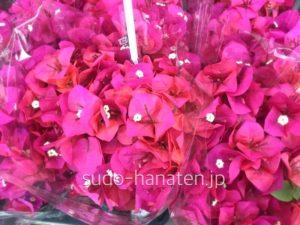 ブーゲンビリアです 南国の花で、暑さに強いのが特徴です
