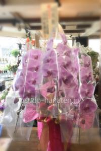 透明のセロファンで花を保護してあるパターン