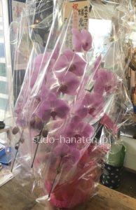 花の保護のため、透明なセロファンでの保護と共に、胡蝶蘭全体をセロファンラッピングして、箱に詰めて送ります
