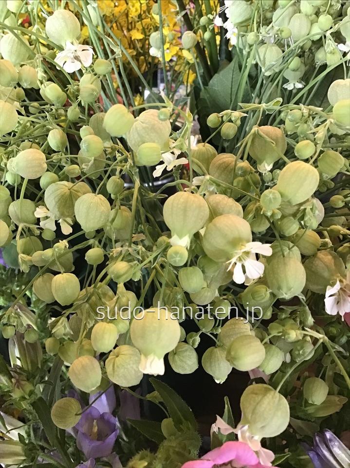 グリーンベルです 釣鐘状に咲いている可愛い花です