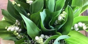 鈴蘭です 愛らしい鈴なりの白い花は見た目の可愛さもありますが、香水にもなるくらい良い香りがします