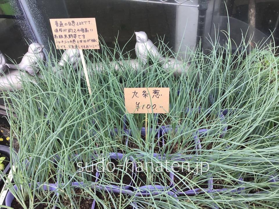 九条葱(クジョウネギ)です 通常の白葱の約2、4倍位の値段のする高級京野菜九条葱(クジョウネギ)です 通常の白葱の約2、4倍位の値段のする高級京野菜