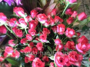 スプレーバラ、ニューハーフです 市場で名前を見て、思わず競り落としていました(笑) 濃いピンク色と、白のグラデーションが綺麗なバラです ピンク系の花束のアクセントにも良さそうです