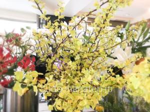 キバデマリ(金葉手毬)です 黄色に近い黄緑色の葉の枝で、この色から金色の葉の手毬ということで、キバデマリ(金葉手毬)名前がついてます