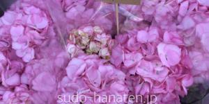 紫陽花で、マリーアントワネットです