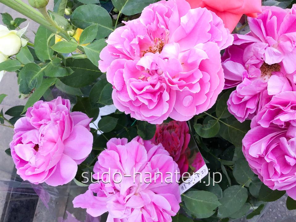 ピンクの芍薬のような大輪の見事な花のポールネイロン