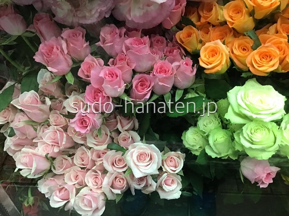 バラ 薔薇 rose