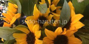 ひまわり ヒマワリ 向日葵