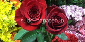 赤バラ フリーダム サムライ,