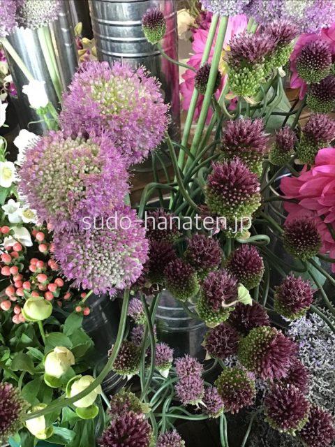 アリアム系の花、タンチョーアリアム、ギガンジウム