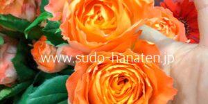 大輪系のオレンジのバラ オレンジロマンティカ