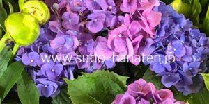 切花のアジサイ